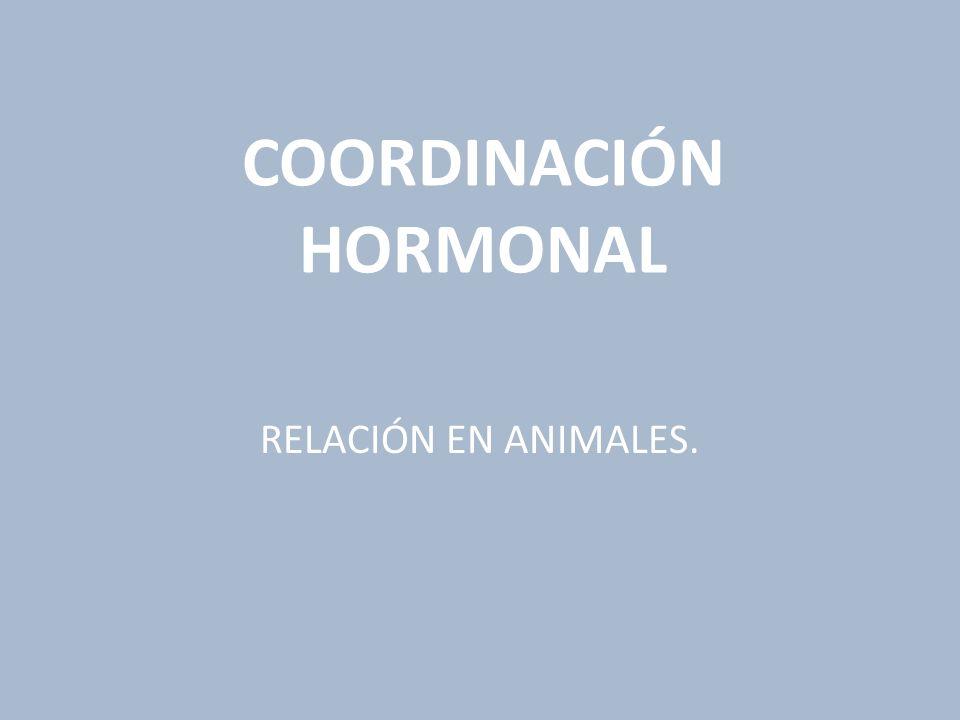 COORDINACIÓN HORMONAL