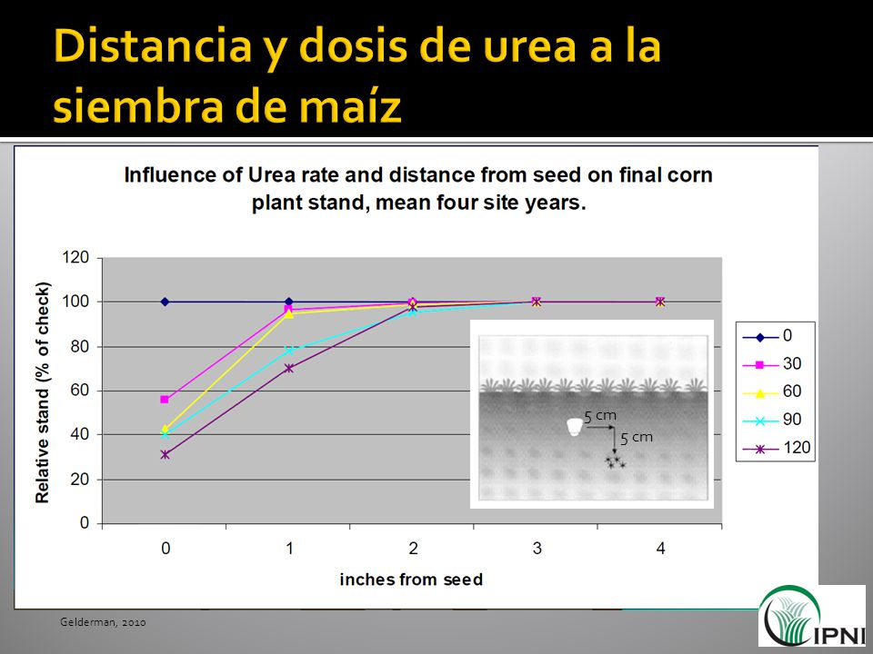 Distancia y dosis de urea a la siembra de maíz