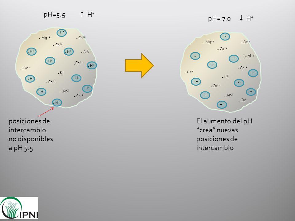 posiciones de intercambio no disponibles a pH 5.5