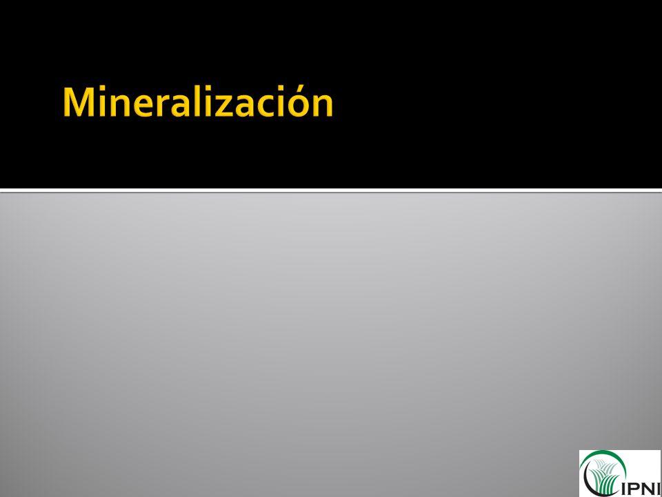 Mineralización