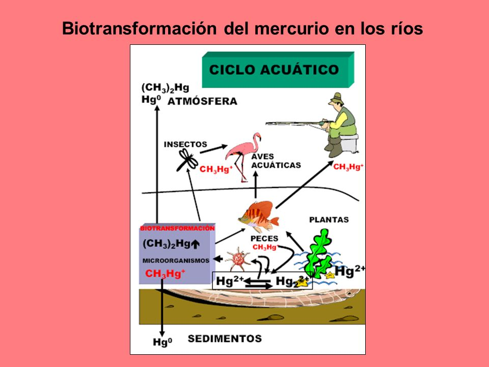 Biotransformación del mercurio en los ríos