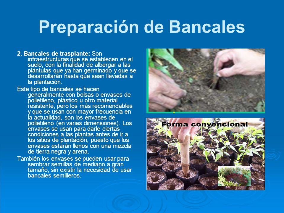 Preparación de Bancales