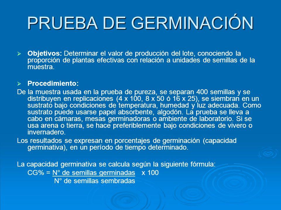 PRUEBA DE GERMINACIÓN
