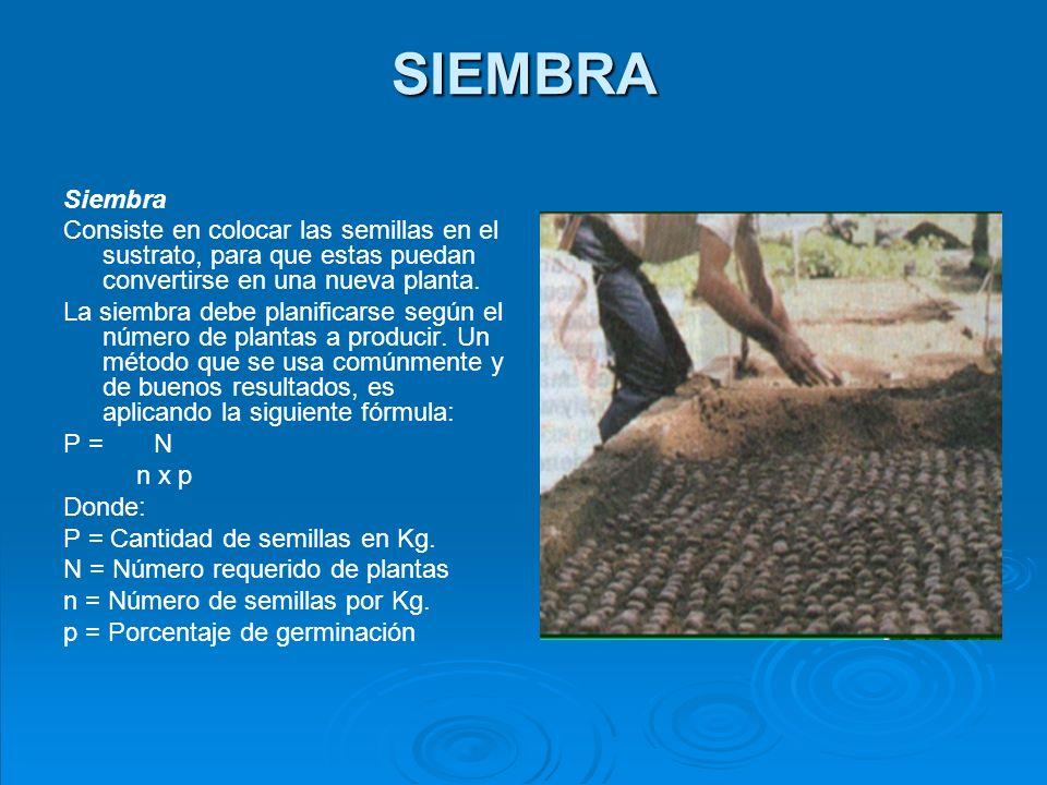 SIEMBRA Siembra. Consiste en colocar las semillas en el sustrato, para que estas puedan convertirse en una nueva planta.