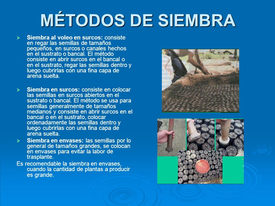 MÉTODOS DE SIEMBRA