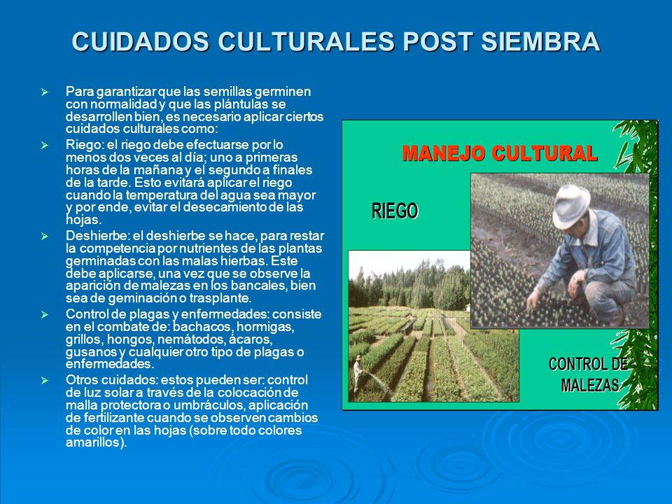 CUIDADOS CULTURALES POST SIEMBRA