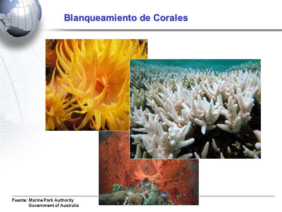 Blanqueamiento de Corales