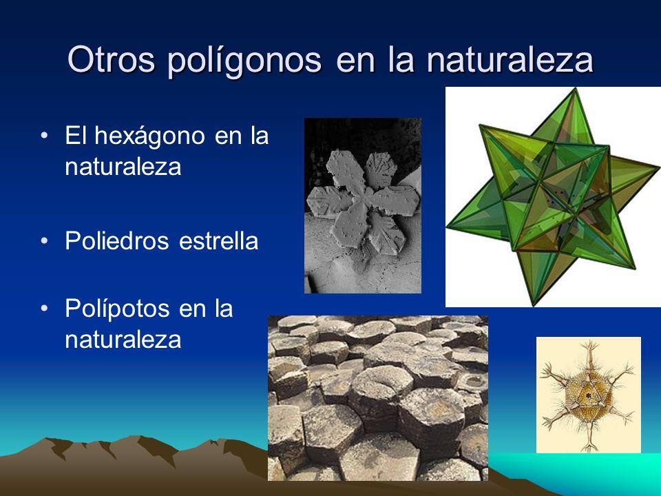 Otros polígonos en la naturaleza