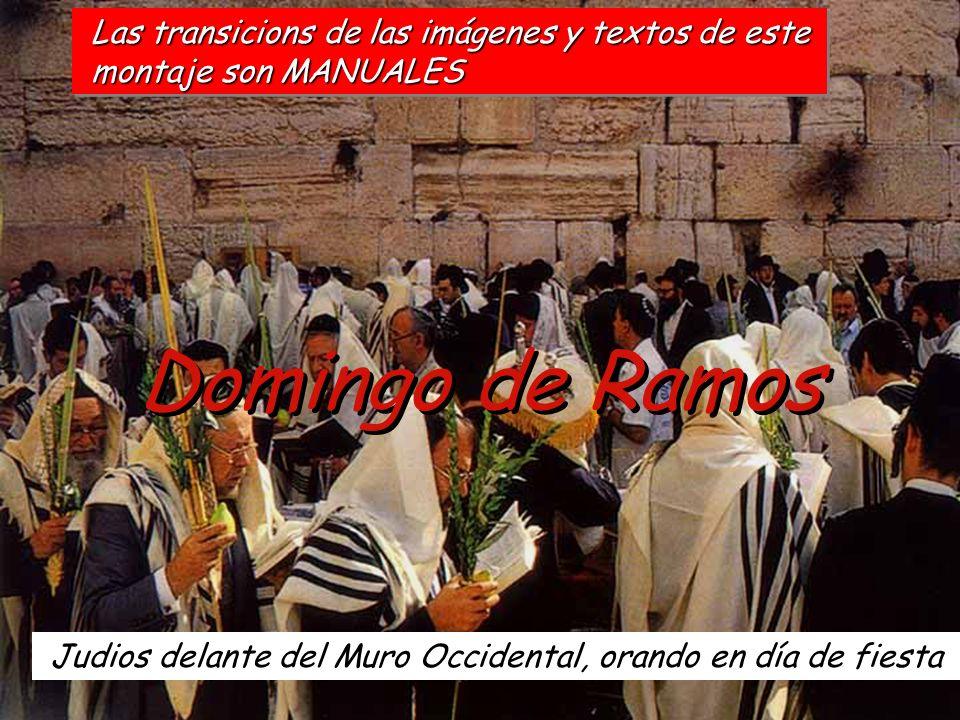 Domingo de Ramos Las transicions de las imágenes y textos de este