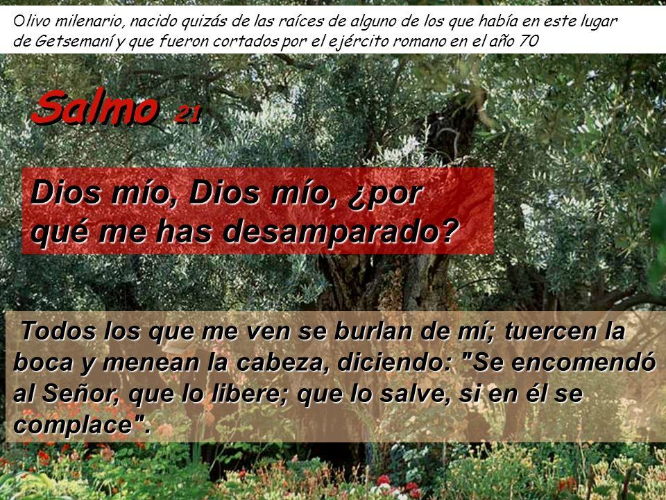 Salmo 21 Dios mío, Dios mío, ¿por qué me has desamparado