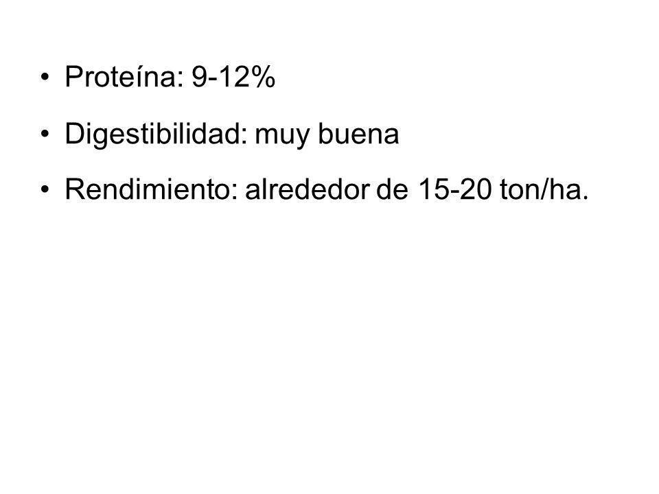 Proteína: 9-12% Digestibilidad: muy buena Rendimiento: alrededor de 15-20 ton/ha.