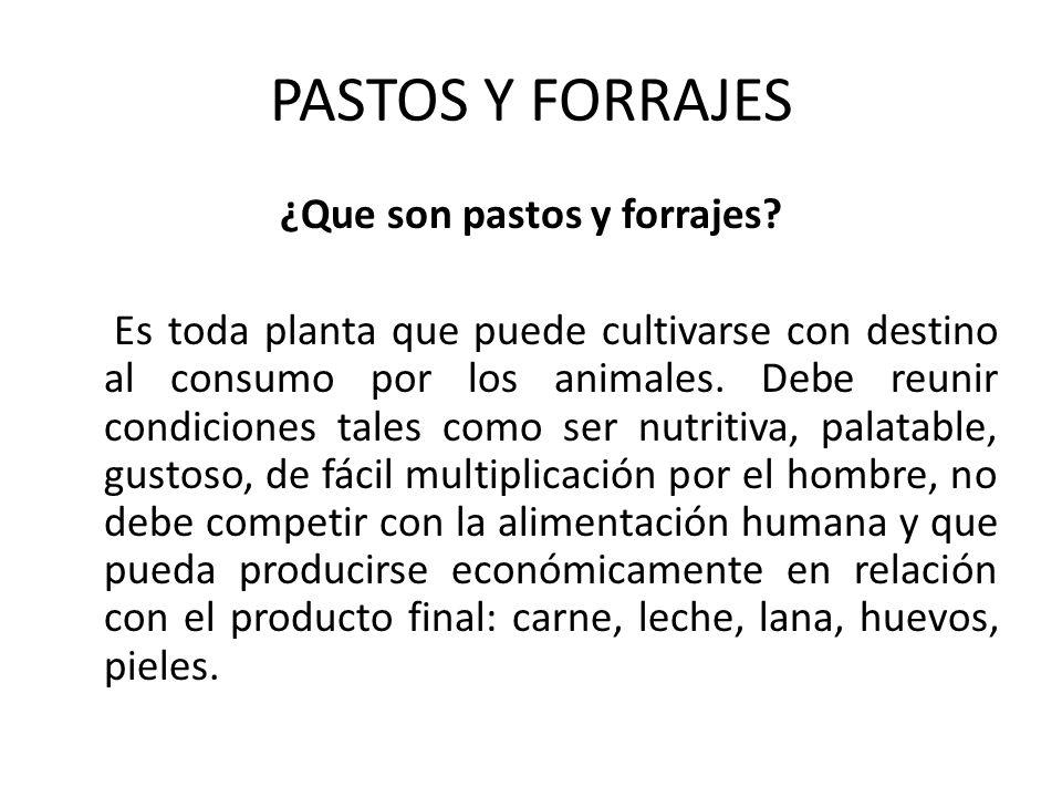 PASTOS Y FORRAJES
