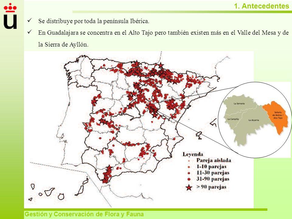 1. Antecedentes Se distribuye por toda la península Ibérica.