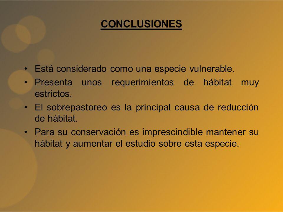 CONCLUSIONES Está considerado como una especie vulnerable.