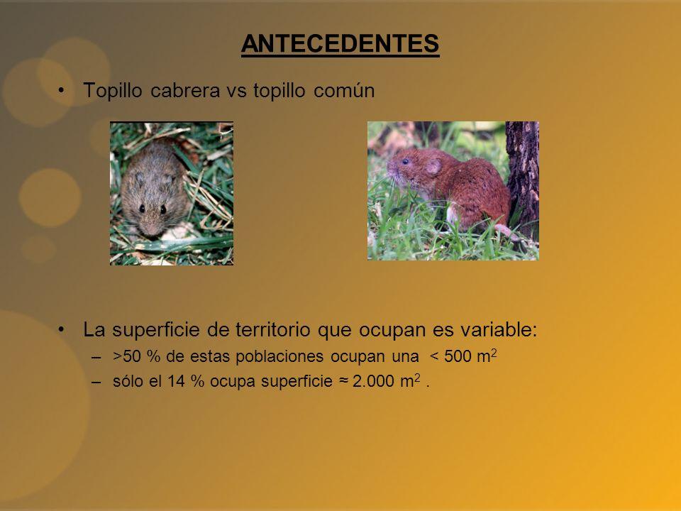 ANTECEDENTES Topillo cabrera vs topillo común