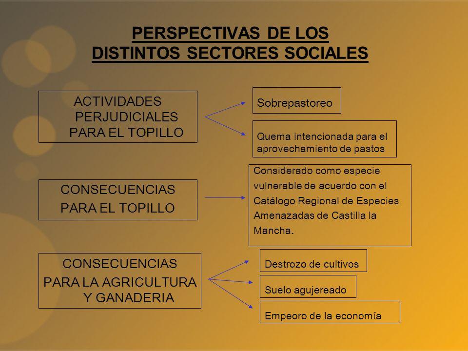 PERSPECTIVAS DE LOS DISTINTOS SECTORES SOCIALES