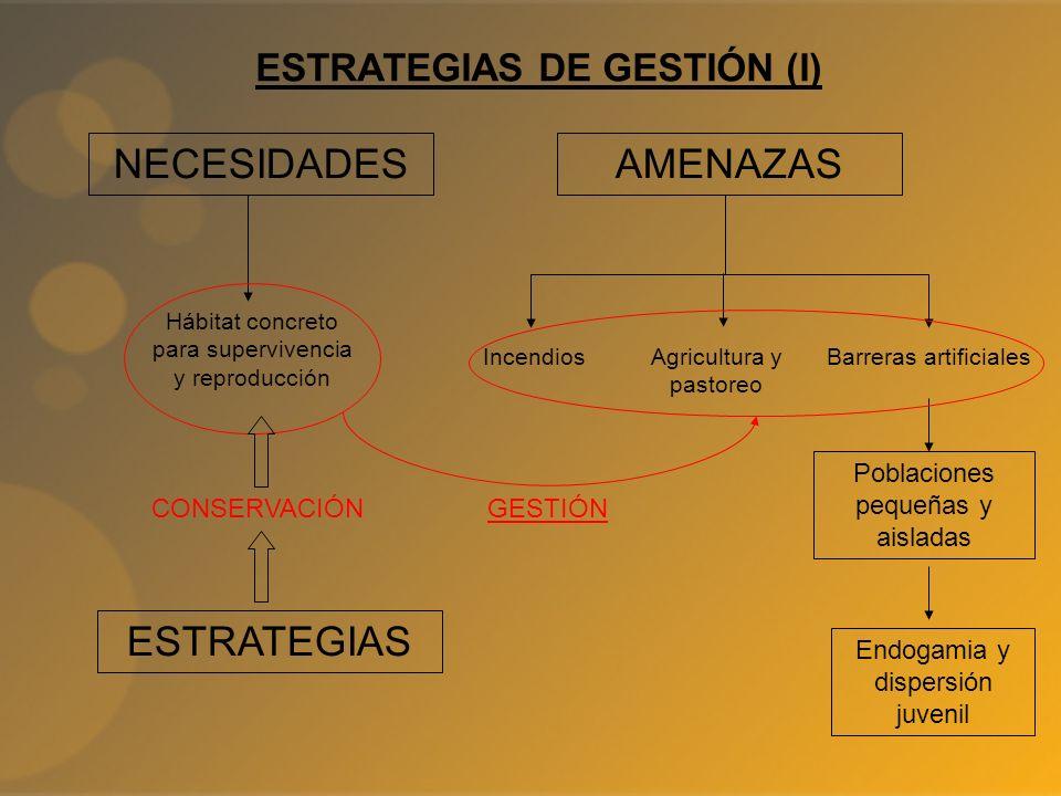 ESTRATEGIAS DE GESTIÓN (I)