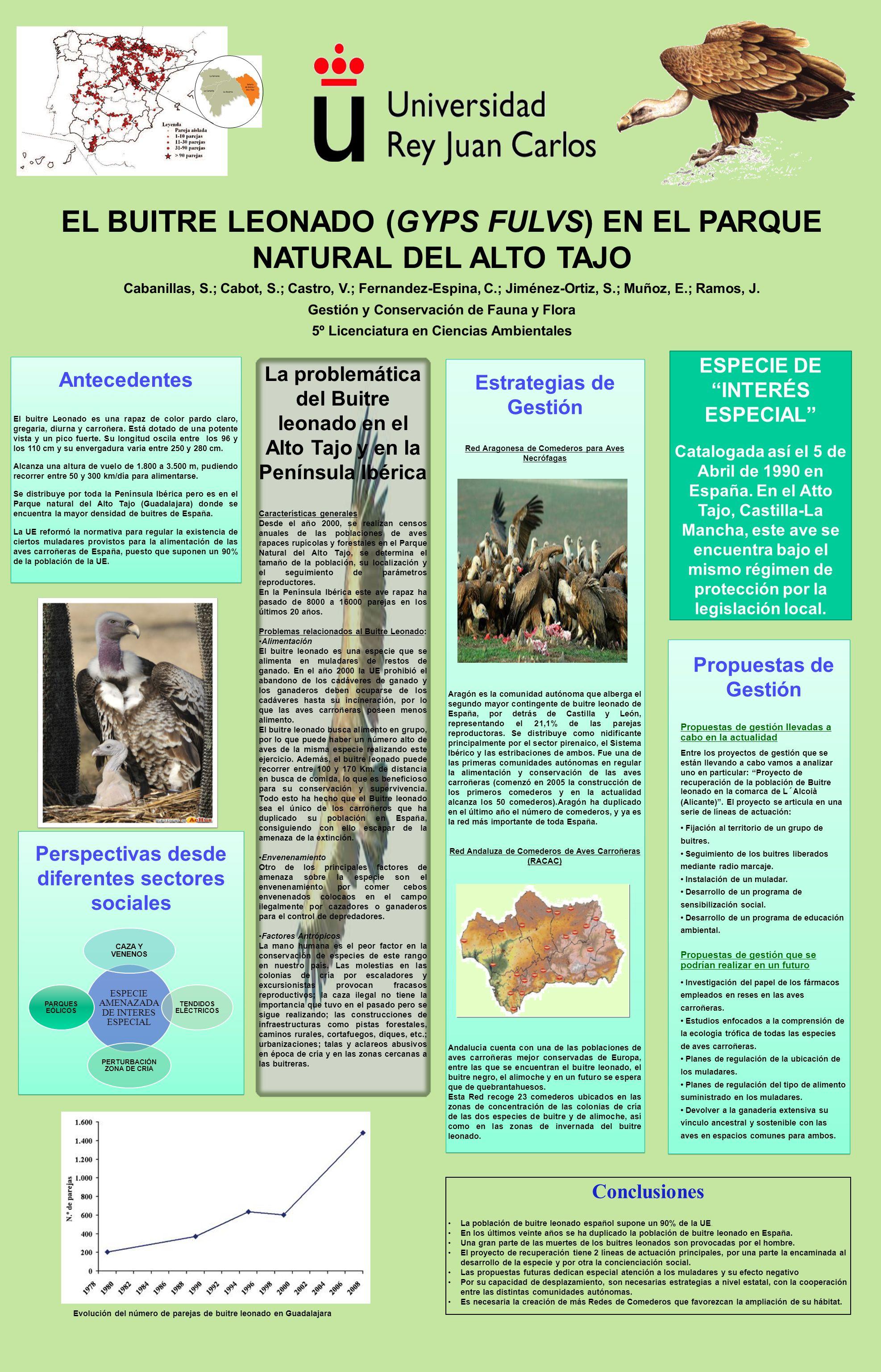 EL BUITRE LEONADO (GYPS FULVS) EN EL PARQUE NATURAL DEL ALTO TAJO