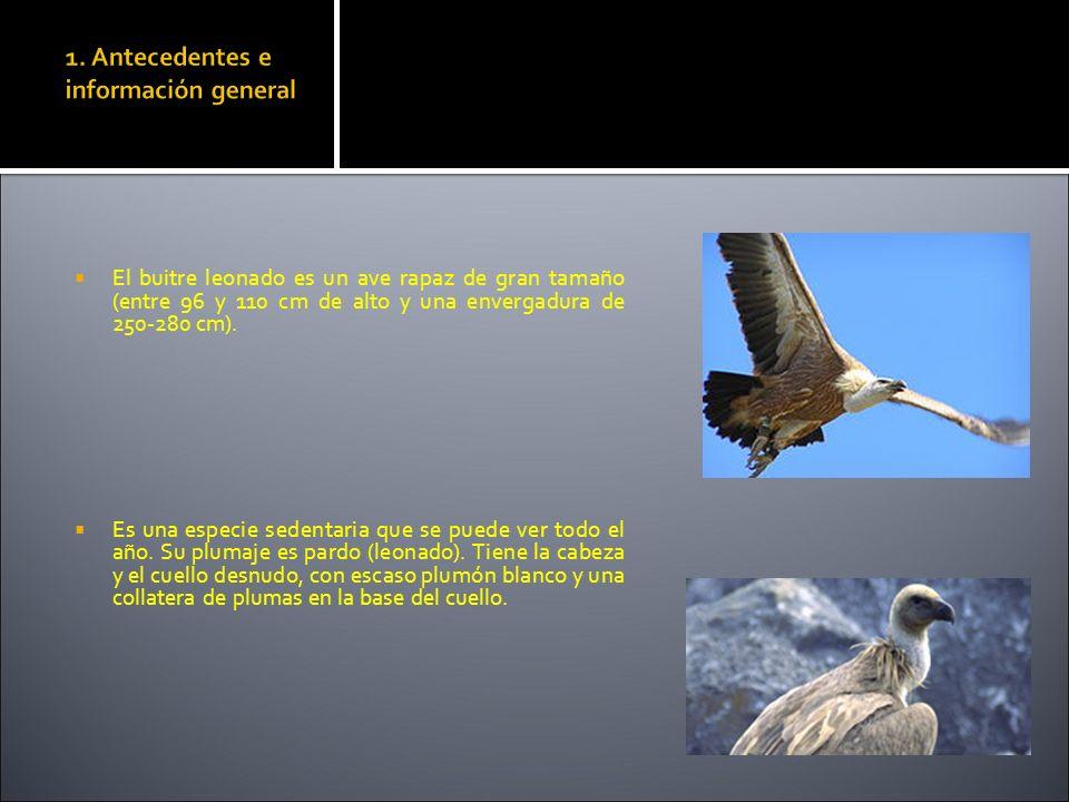 1. Antecedentes e información general