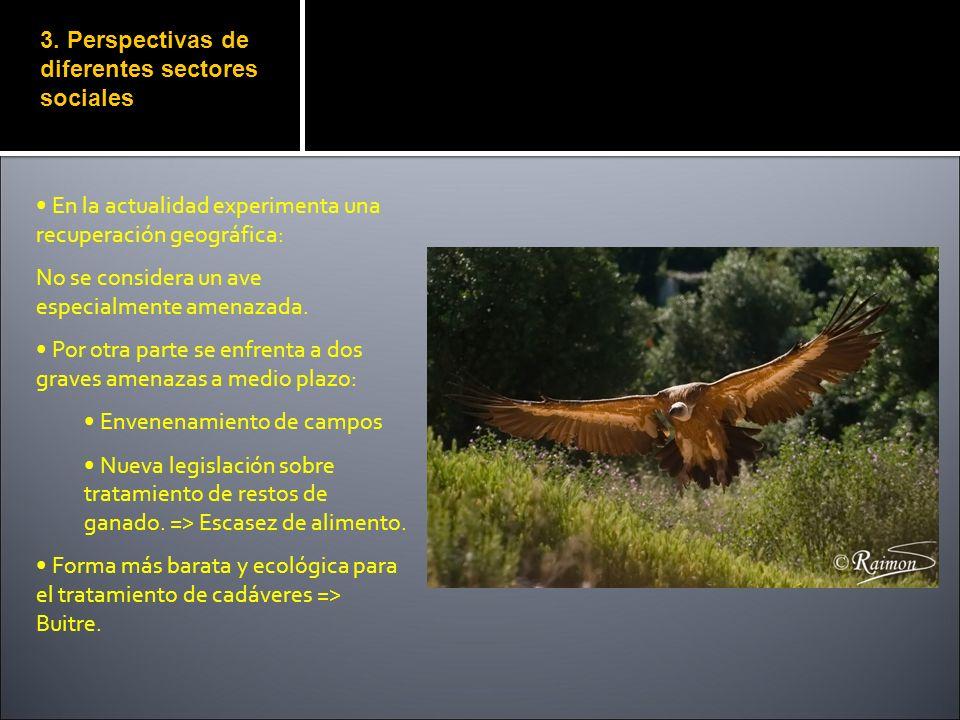 3. Perspectivas de diferentes sectores sociales