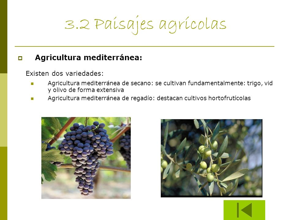 3.2 Paisajes agrícolas Existen dos variedades: