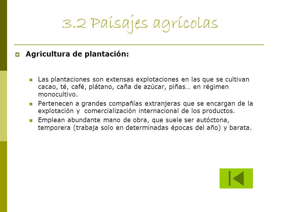 3.2 Paisajes agrícolas Agricultura de plantación: