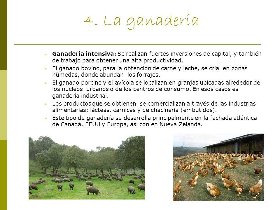 4. La ganadería Ganadería intensiva: Se realizan fuertes inversiones de capital, y también de trabajo para obtener una alta productividad.