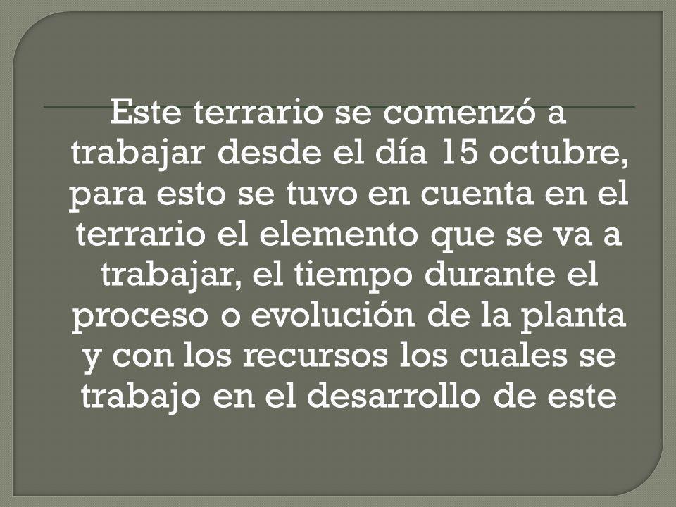 Este terrario se comenzó a trabajar desde el día 15 octubre, para esto se tuvo en cuenta en el terrario el elemento que se va a trabajar, el tiempo durante el proceso o evolución de la planta y con los recursos los cuales se trabajo en el desarrollo de este