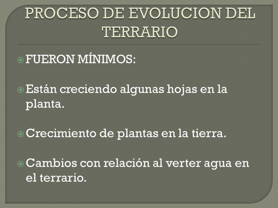 PROCESO DE EVOLUCION DEL TERRARIO