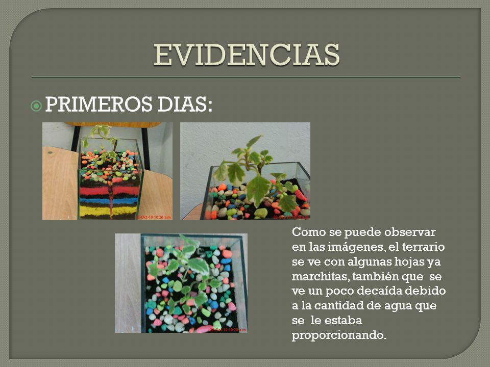 EVIDENCIAS PRIMEROS DIAS: