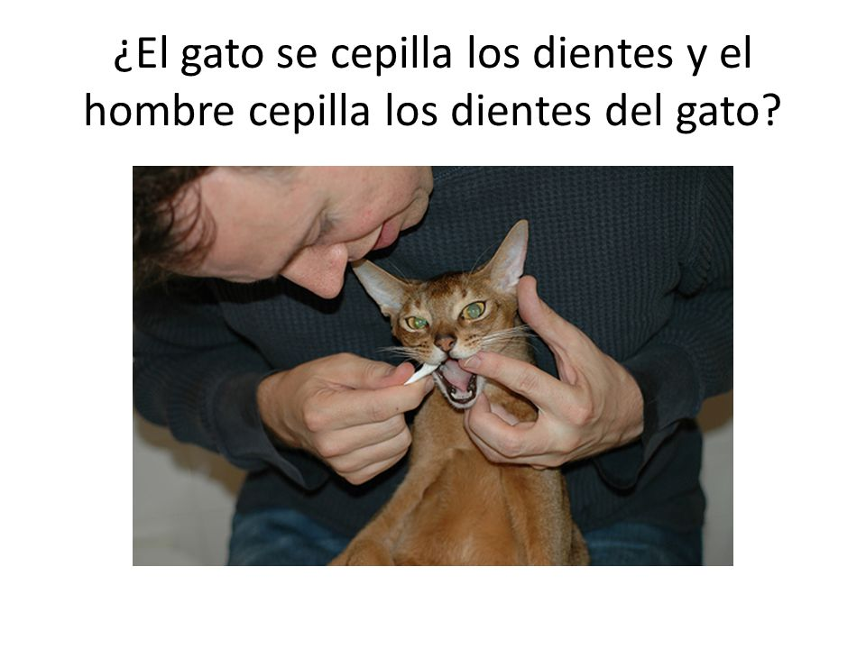 ¿El gato se cepilla los dientes y el hombre cepilla los dientes del gato