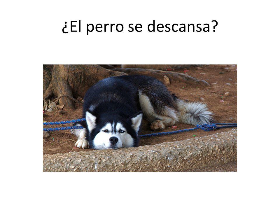 ¿El perro se descansa