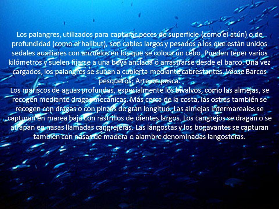 Los palangres, utilizados para capturar peces de superficie (como el atún) o de profundidad (como el halibut), son cables largos y pesados a los que están unidos sedales auxiliares con anzuelos en los que se coloca un cebo. Pueden tener varios kilómetros y suelen fijarse a una boya anclada o arrastrarse desde el barco. Una vez cargados, los palangres se suben a cubierta mediante cabrestantes. Véase Barcos pesqueros; Arte de pesca.