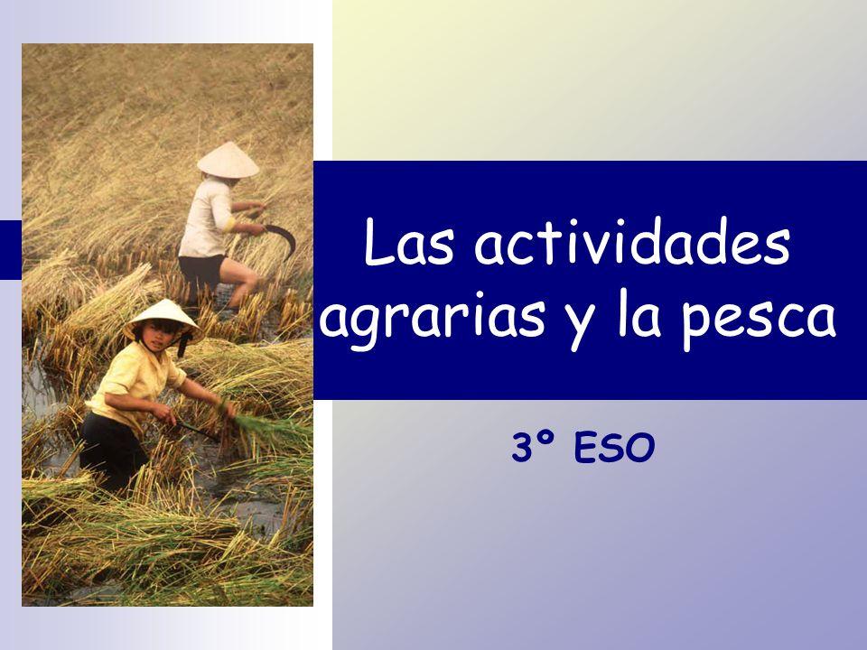 Las actividades agrarias y la pesca