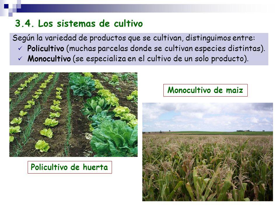 3.4. Los sistemas de cultivo