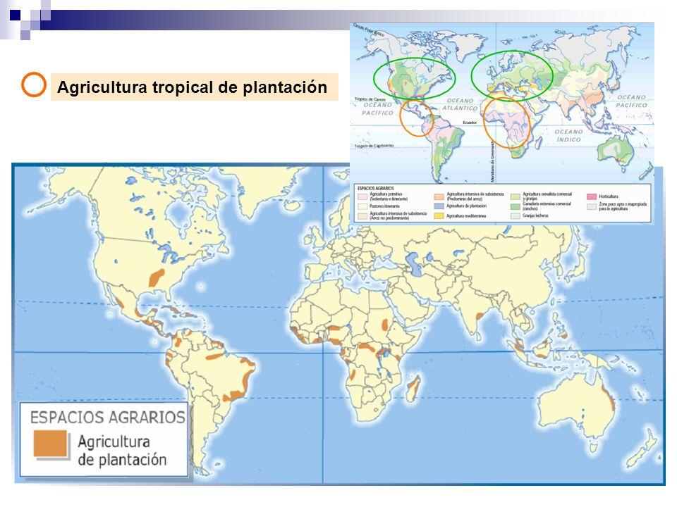 Agricultura tropical de plantación