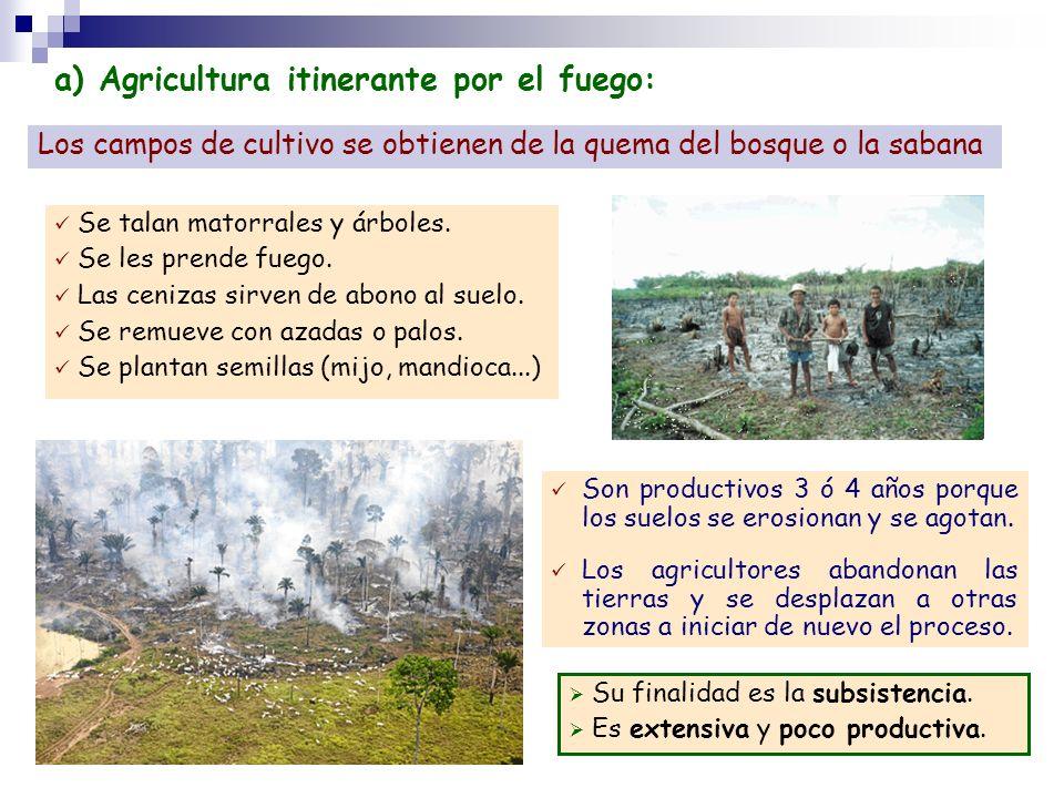 a) Agricultura itinerante por el fuego: