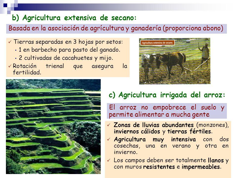 b) Agricultura extensiva de secano: