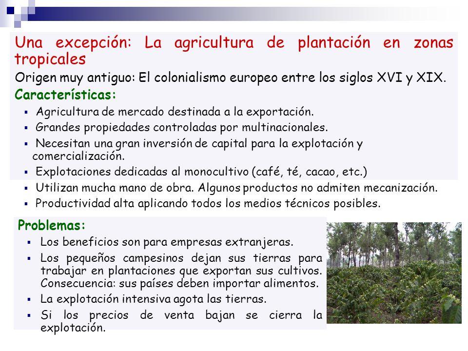 Una excepción: La agricultura de plantación en zonas tropicales