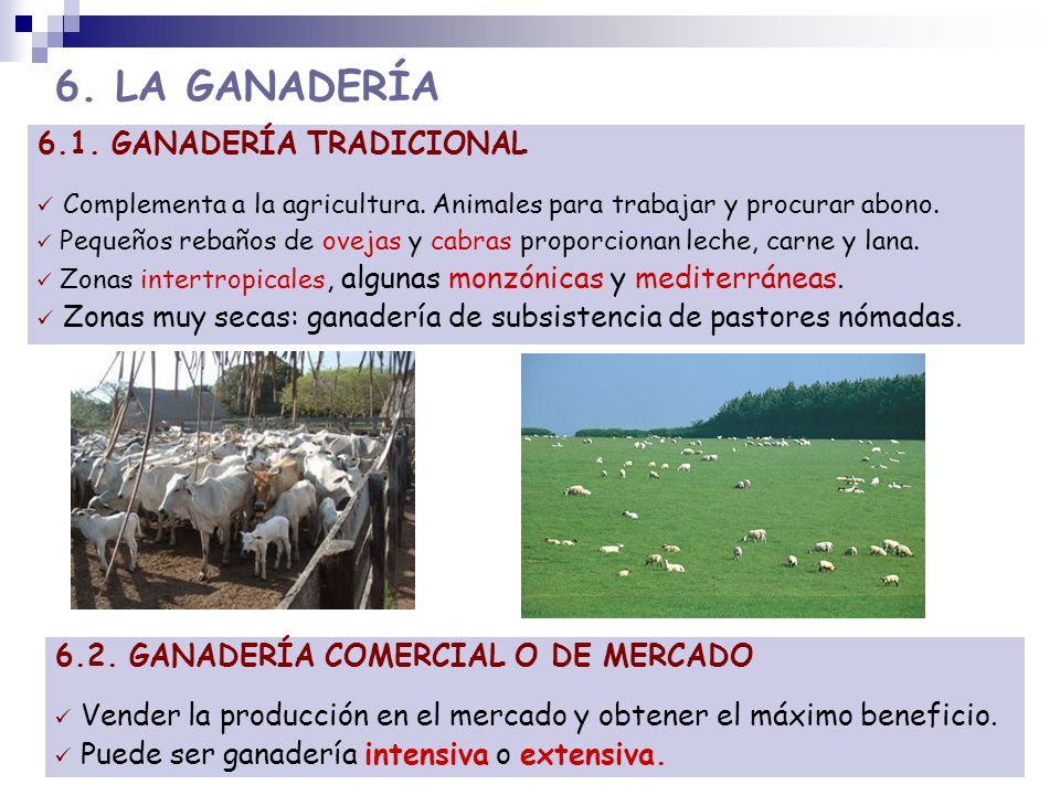 6. LA GANADERÍA 6.1. GANADERÍA TRADICIONAL