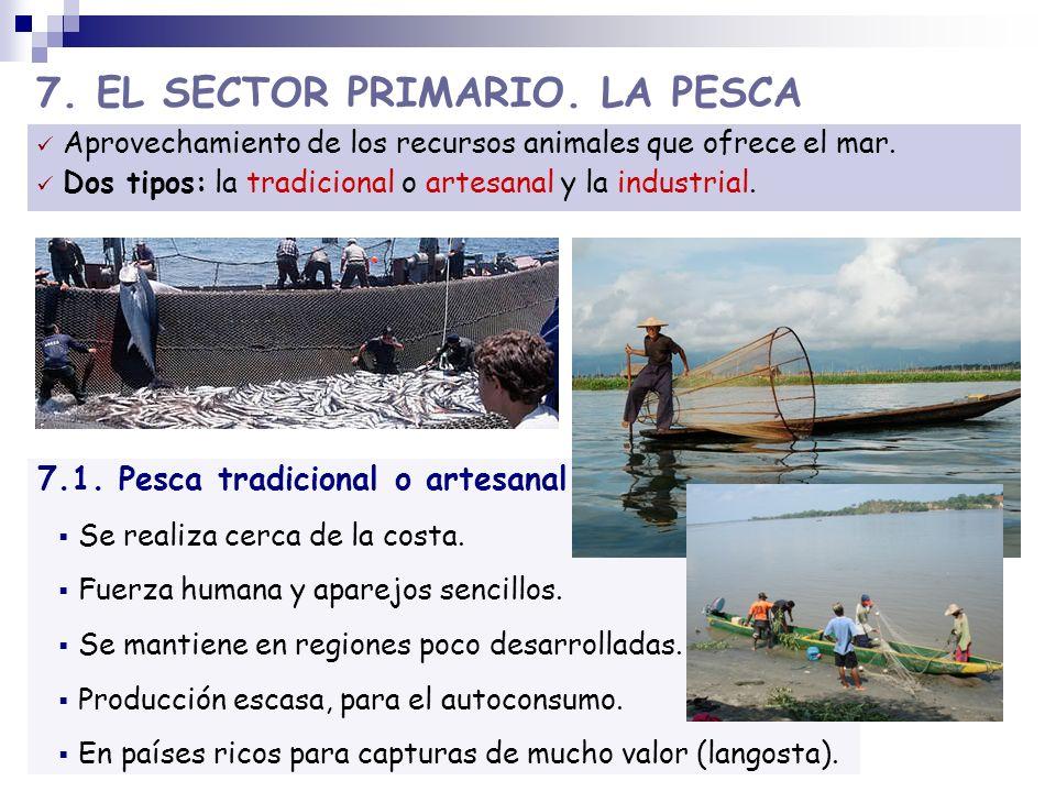 7. EL SECTOR PRIMARIO. LA PESCA