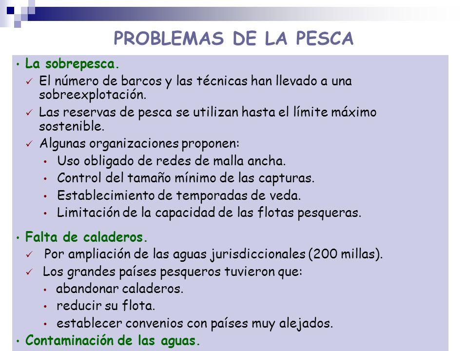 PROBLEMAS DE LA PESCA La sobrepesca.