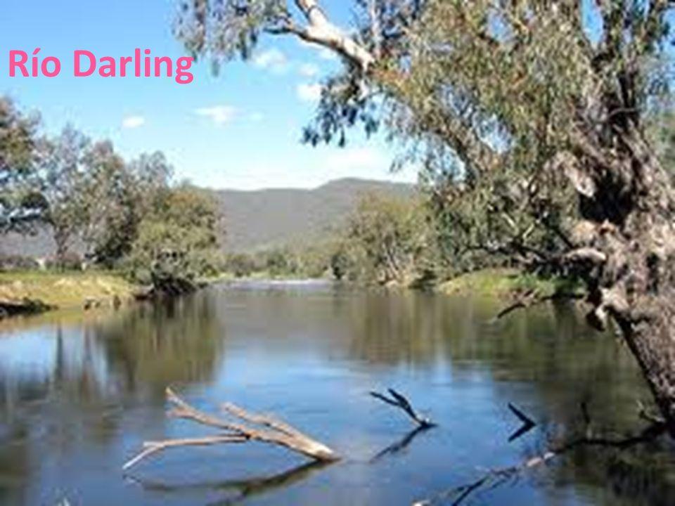 Río Darling 26/04/12