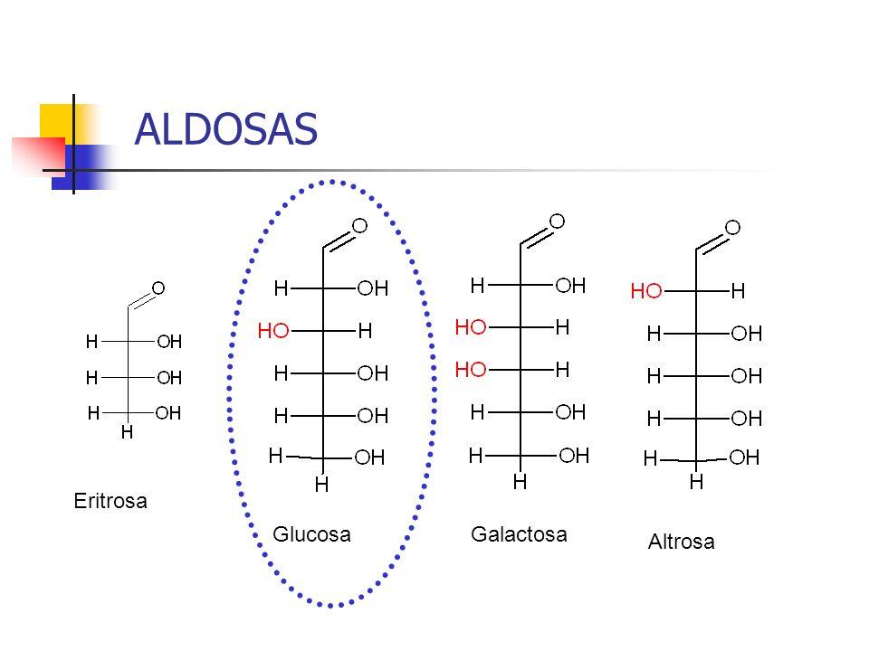 ALDOSAS Eritrosa Glucosa Galactosa Altrosa