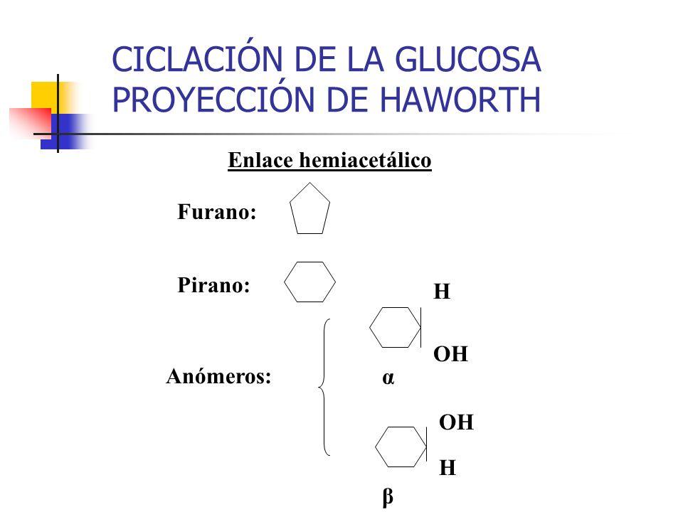 CICLACIÓN DE LA GLUCOSA PROYECCIÓN DE HAWORTH