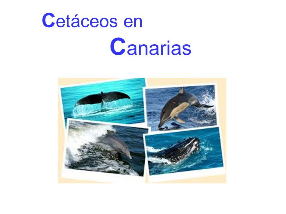 Cetáceos en Canarias