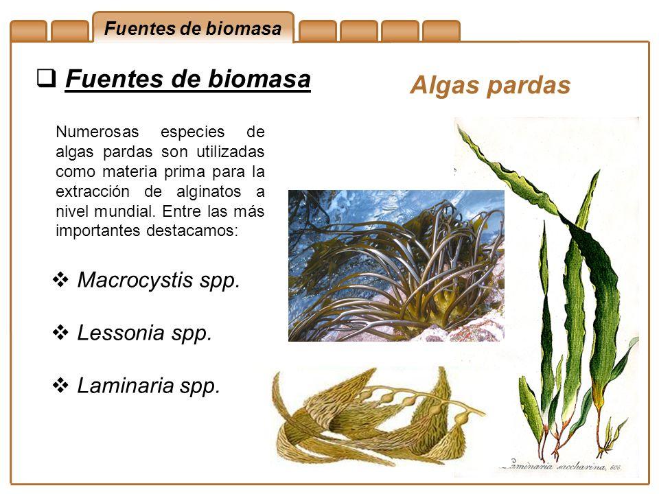 Fuentes de biomasa Algas pardas Macrocystis spp. Lessonia spp.