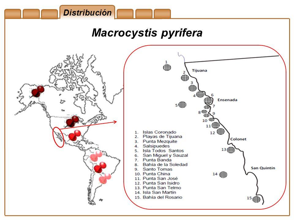 Distribución Macrocystis pyrifera