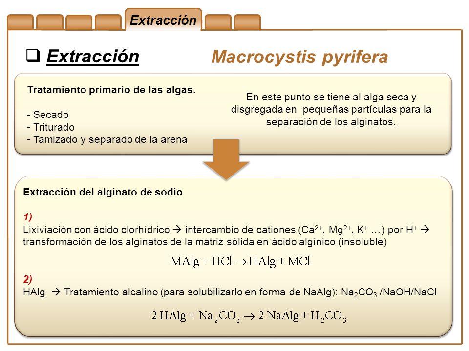 Extracción Macrocystis pyrifera Extracción