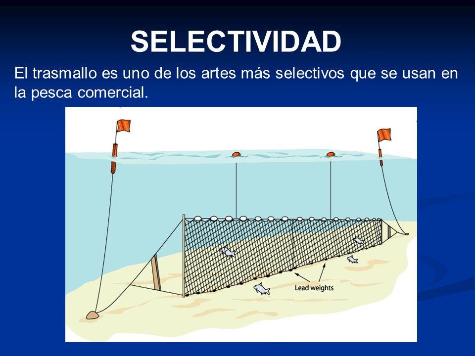 SELECTIVIDAD El trasmallo es uno de los artes más selectivos que se usan en la pesca comercial.